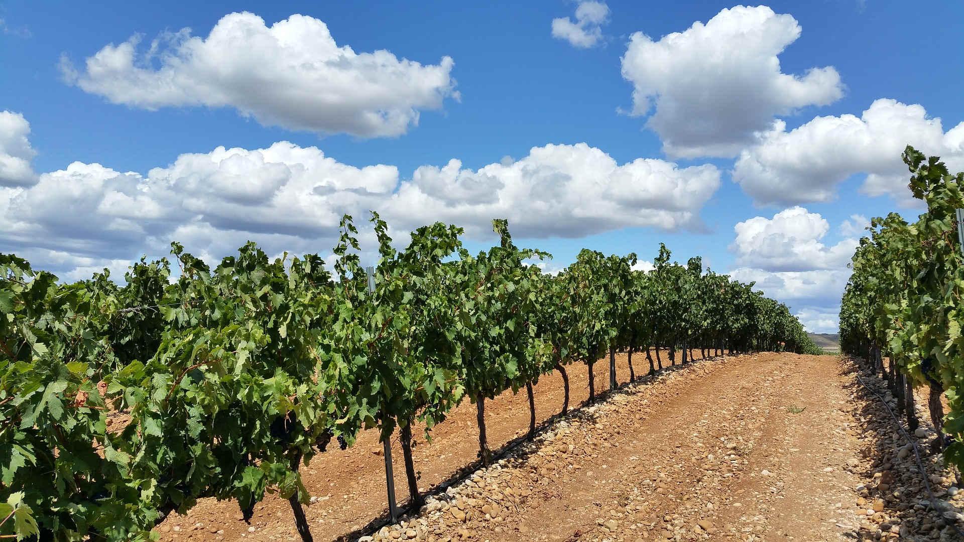 i migliori vini toscani da tavola direttamente dalle nostre cantine