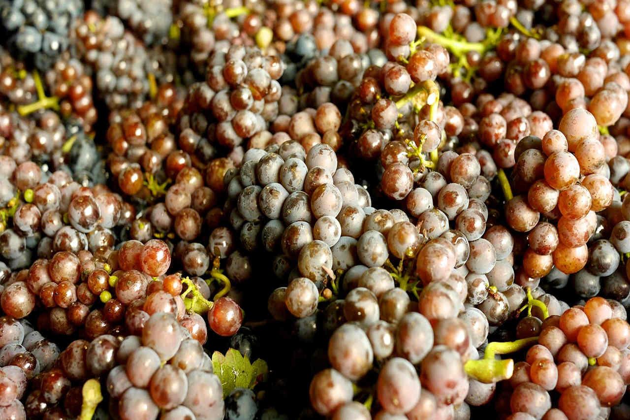fermentazione processo che porta il mosto a diventare vino